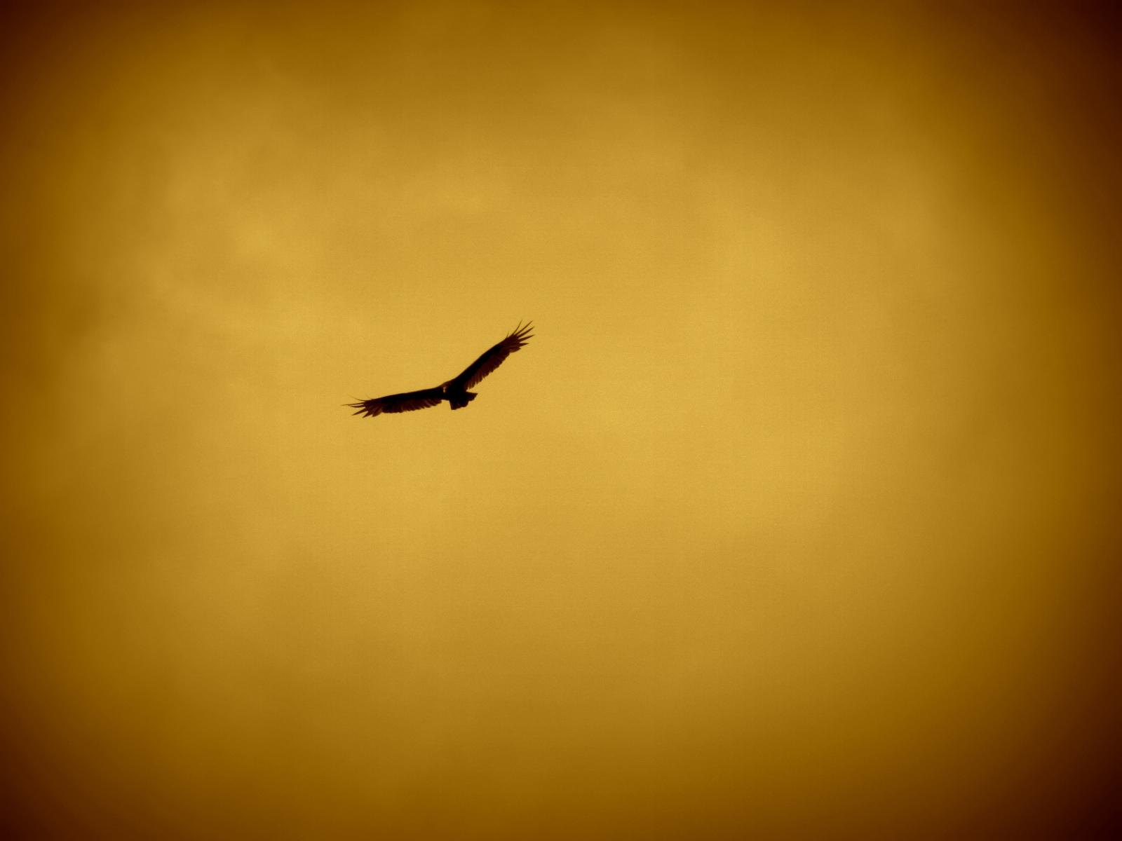 eagle-57229