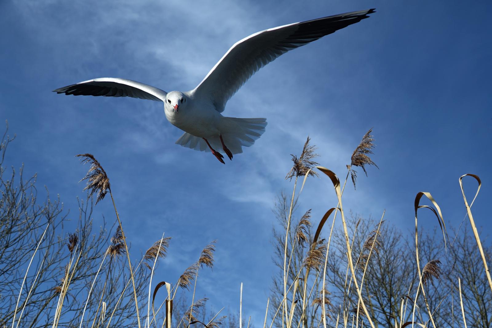 seagull-700074